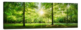 Canvas  Green Forest Panorama in sunlight - Jan Christopher Becke
