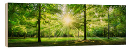 Wood print  Green Forest Panorama in sunlight - Jan Christopher Becke