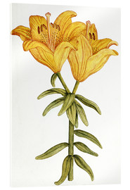Acrylic glass  Yellow Lily - French School
