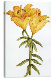 Canvas print  Yellow Lily - French School