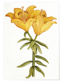 Premium poster  Yellow Lily - French School