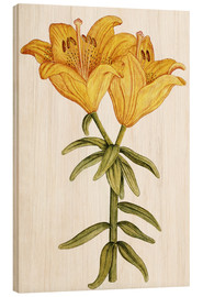 Wood print  Yellow Lily - French School