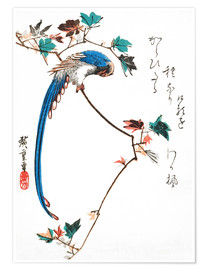 Premium poster Blue Magpie on Maple Branch