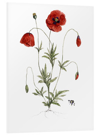 Foam board print  Poppy - German School
