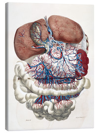Canvas  Internal organs, Liver, Stomach, Intestines - François Carlo Antommarchi