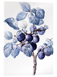 Acrylic print  Branch of a plum with fruits - Pierre Joseph Redouté