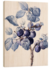 Wood print  Branch of a plum with fruits - Pierre Joseph Redouté