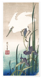 Premium poster White heron and iris
