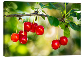 Canvas print  Ripe cherries - Michael Interisano