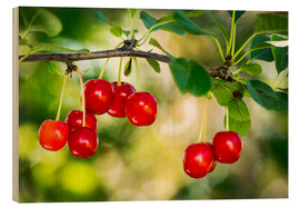 Wood print  Ripe cherries - Michael Interisano