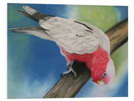 Foam board print  pink cockatoo - Monica Schwarz