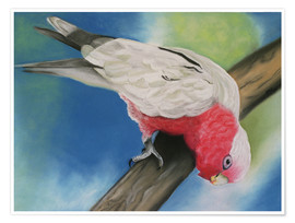 Monica Schwarz - pink cockatoo