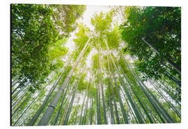 Alu-Dibond  Light falls through the bamboo forest