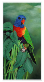 Premium poster  colorful Rainbow lorikeet - Monica Schwarz