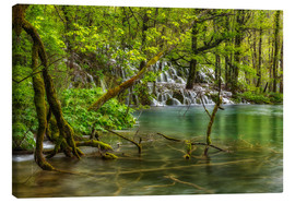 Canvas print  Wild water forest - Moqui, Daniela Beyer