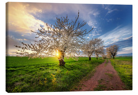 Canvas  Cherry trees in spring - Steffen Gierok