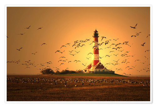 Premium poster Sunset at Westerhever