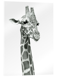 Acrylic print  Sketch Of A Smiling Giraffe - Ashley Verkamp