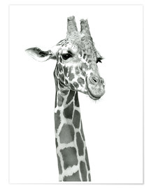 Premium poster  Sketch Of A Smiling Giraffe - Ashley Verkamp
