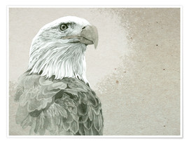Poster  Bald Eagle Majestic - Ashley Verkamp
