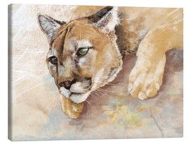 Canvas  Captived Mountain Lion - Ashley Verkamp