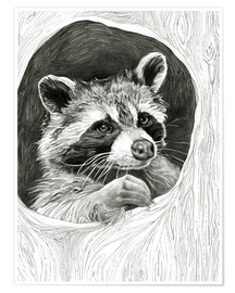 Premium poster  Raccoon In A Hollow Tree Sketch - Ashley Verkamp