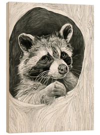 Wood  Raccoon In A Hollow Tree Sketch - Ashley Verkamp