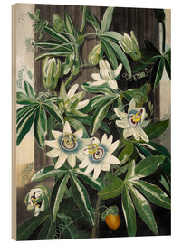 Wood  The blue passion flower (Passiflora caerulea) - Robert John Thornton
