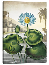 Canvas print  The blue Egyptian water-lily - Robert John Thornton