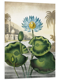 Forex  The blue Egyptian water-lily - Robert John Thornton