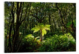 Acrylic print  Tree fern in the rainforest New Zealand - Michael Rucker