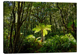 Canvas print  Tree fern in the rainforest New Zealand - Michael Rucker