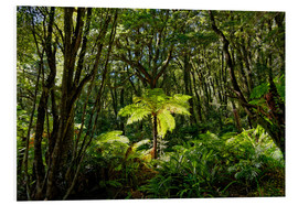 Foam board print  Tree fern in the rainforest New Zealand - Michael Rucker