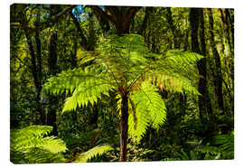 Canvas print  Tree fern (Cyatheales) in Milford Sound New Zealand - Michael Rucker