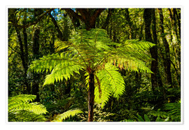 Premium poster Tree fern (Cyatheales) in Milford Sound New Zealand