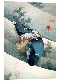 Acrylic print  Duck Swimming in Water - Katsushika Hokusai