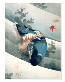 Poster  Duck Swimming in Water - Katsushika Hokusai