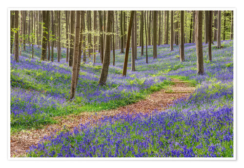 Premium poster Path through the blue forest