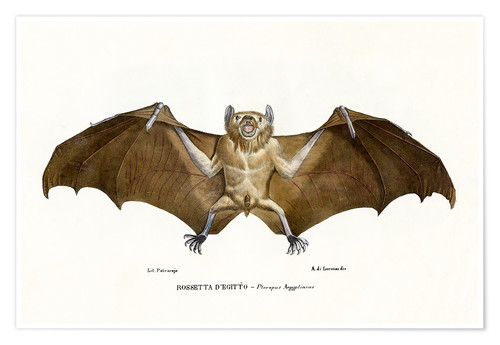 Premium poster Egyptian Fruit Bat