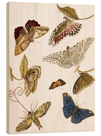Wood print  Moths and butterfiles - Maria Sibylla Merian