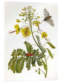 Acrylic glass  A moth and a caterpillar - Maria Sibylla Merian
