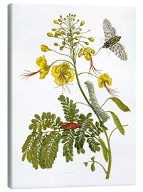 Canvas print  A moth and a caterpillar - Maria Sibylla Merian
