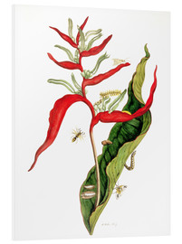 Forex  Insects - Maria Sibylla Merian