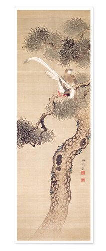 Premium poster Long tailed birds on a pine tree