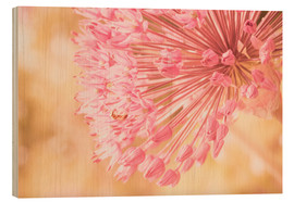 Wood print  Creamy Summer - Allium in Pink - INA FineArt