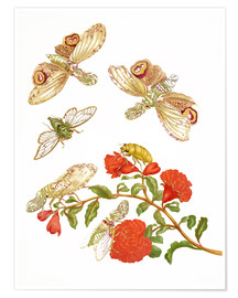 Premium poster Pomegranate with Lantern Fly and Cicada
