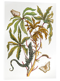 Acrylic print  cassava with crocodile and butterfly metamorphosis - Maria Sibylla Merian