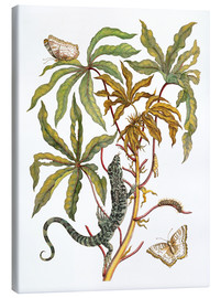 Canvas print  Cassava, lizard and butterfly - Maria Sibylla Merian