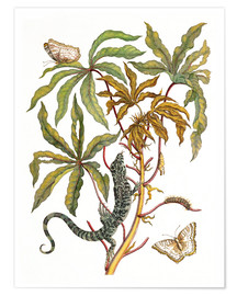 Premium poster  cassava with crocodile and butterfly metamorphosis - Maria Sibylla Merian