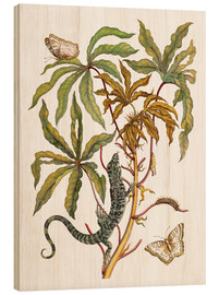 Wood  cassava with crocodile and butterfly metamorphosis - Maria Sibylla Merian